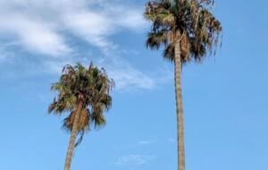 A clear blue sky-By Capt Elmo Jayawardena